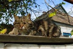 Зверский бездомный кот стоковые изображения