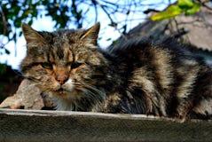 Зверский бездомный кот стоковые фото