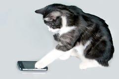 Звонить по телефону коту стоковая фотография rf