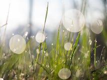 Звуки травы Стоковое Изображение