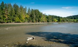 Звук Puget малой воды залива грязи, Олимпия Вашингтон стоковые изображения rf