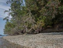 Звук Puget малой воды залива грязи, Олимпия Вашингтон стоковая фотография