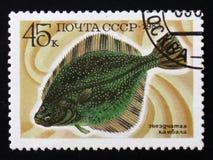 Звёздные рыбы flounder Стоковая Фотография