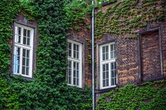 Здание с много Windows и виноградник Стоковое Изображение RF