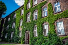 Здание с много Windows и виноградник Стоковые Фотографии RF