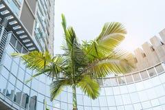 Здания Highrise с пальмой Стоковая Фотография RF