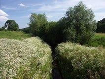 здесь весна Стоковое фото RF
