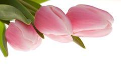 здесь весна стоковые изображения rf