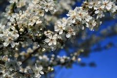 здесь последняя весна Стоковые Изображения RF