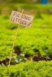 здесь signage рудоразборки салата Стоковые Фото