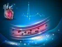 Здоровая артерия Стоковые Фото
