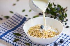 Здоровая овсяная каша с голубиками, молоко завтрака льет от кувшина молока к каше на светлой предпосылке стоковые фото