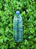 здоровая питья свежая Стоковое фото RF