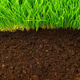 здоровая почва Стоковые Изображения RF