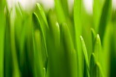 Здоровая трава Стоковые Фотографии RF