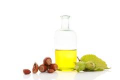 Здоровое масло фундука Стоковые Фотографии RF