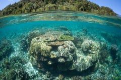 Здоровые рифообразующие кораллы в радже Ampat Стоковая Фотография RF
