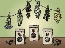 Здоровые травы и иллюстрация вектора стиля естественного чая плоская иллюстрация вектора