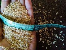 Здоровый рис Брайна на руке Стоковая Фотография