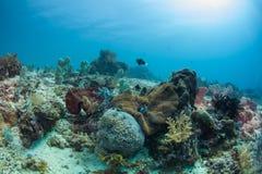 Здоровый риф Стоковая Фотография