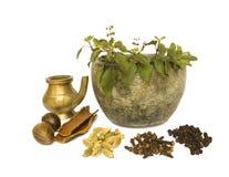 здоровье ayurveda естественное Стоковые Изображения