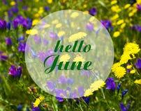 Здравствуйте! июнь Приветствующая карточка с текстом на предпосылке луга лета естественной флористической Концепция летнего време стоковое фото rf