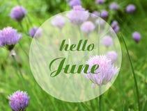 Здравствуйте карта в июне приветствуя с текстом на цветках Chives запачканных естественных флористических чеснока и предпосылке з стоковое изображение