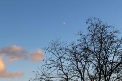 Здравствуйте! луна через ветви Стоковые Изображения RF