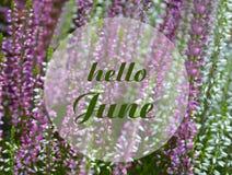 Здравствуйте поздравительная открытка в июне с текстом на зацветая предпосылке пинка и белых вереска естественной флористической  иллюстрация штока