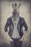 Зебра в одеждах График концепции в винтажном стиле Стоковое фото RF