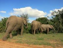 Зебра в Forrest Африке Стоковые Изображения