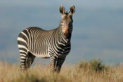 зебра горы плащи-накидк Стоковое Фото