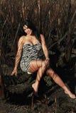 зебра девушки одичалая Стоковое Изображение