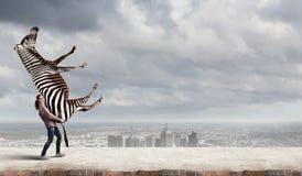 Зебра девушки поднимаясь Стоковые Изображения