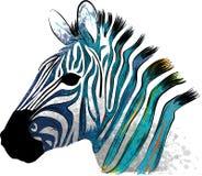 Зебра иллюстрации животная с нашивками акварели в предпосылке иллюстрация штока