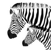 зебра иллюстрации младенца Стоковые Изображения RF