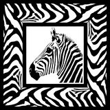 зебра картины рамки Стоковое Фото
