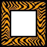 зебра картины рамки Стоковое Изображение