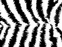 зебра картины Стоковые Изображения RF