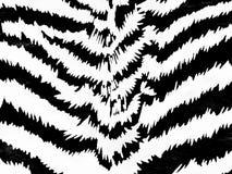 зебра картины Стоковая Фотография