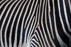 зебра кожи предпосылки Стоковые Изображения RF