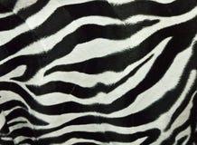 зебра кожи предпосылки Стоковое Фото