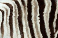 зебра кожи предпосылки Стоковое Изображение RF
