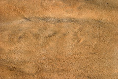зебра кожи стороны задней кожи Стоковая Фотография RF