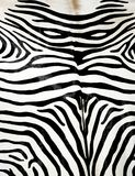 зебра кожи Стоковые Фотографии RF