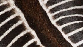 зебра кожи gr s vy Стоковые Изображения RF