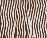 зебра краткости шерсти младенца Стоковое Изображение
