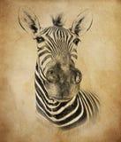 Зебра на винтажной предпосылке Иллюстрация в притяжке, стиле эскиза Стоковые Изображения