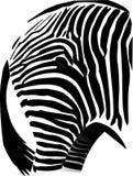 зебра оковалка Стоковые Фото