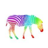 Зебра радуги изолированная на белой предпосылке вектор Стоковые Изображения RF